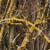 capture-d2019e0301cran-2013-04-21-a0300-12.01.46