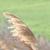 capture-d2019e0301cran-2015-01-01-a0300-11.25.28