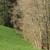 capture-d2019e0301cran-2015-04-18-a0300-20.06.48