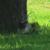capture-d2019e0301cran-2015-06-07-a0300-00.38.30