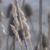 capture-d2019e0301cran-2015-11-28-a0300-18.18.59