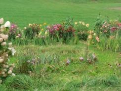 fleurs-self-sottens